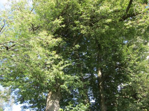 Image of: Tree Famous Nature Sayings Apdtranslate Famous Nature Sayings Apdtranslate